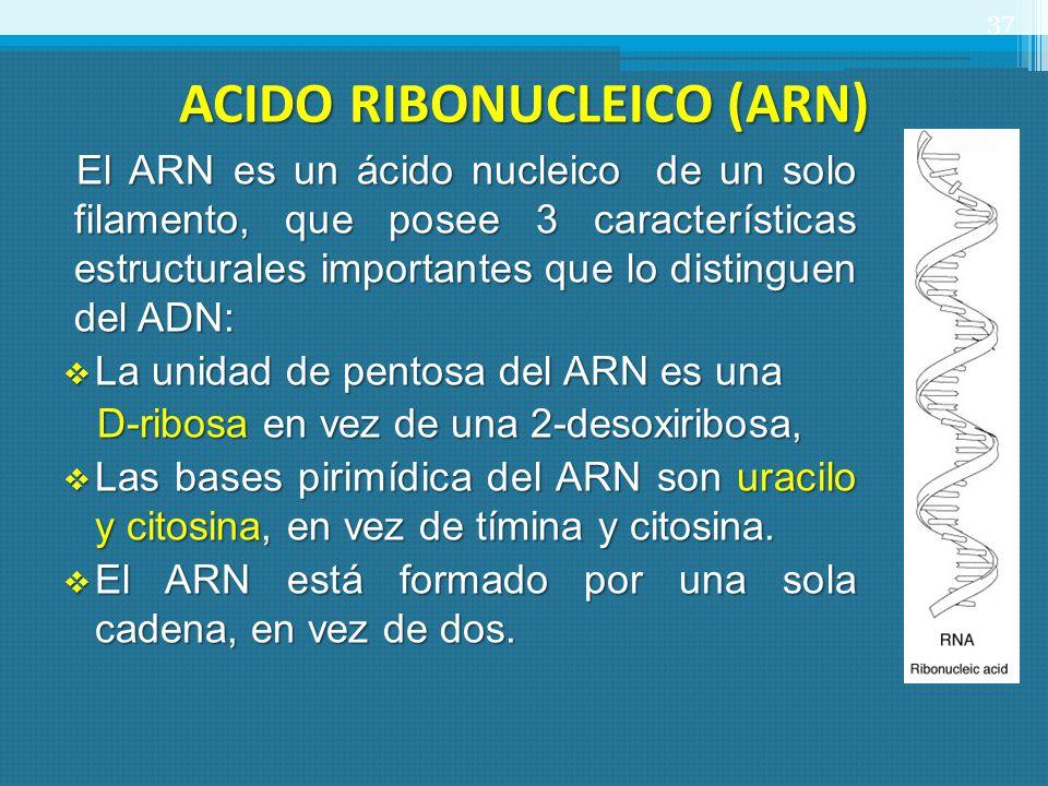 ACIDO RIBONUCLEICO (ARN) El ARN es un ácido nucleico de un solo filamento, que posee 3 características estructurales importantes que lo distinguen del