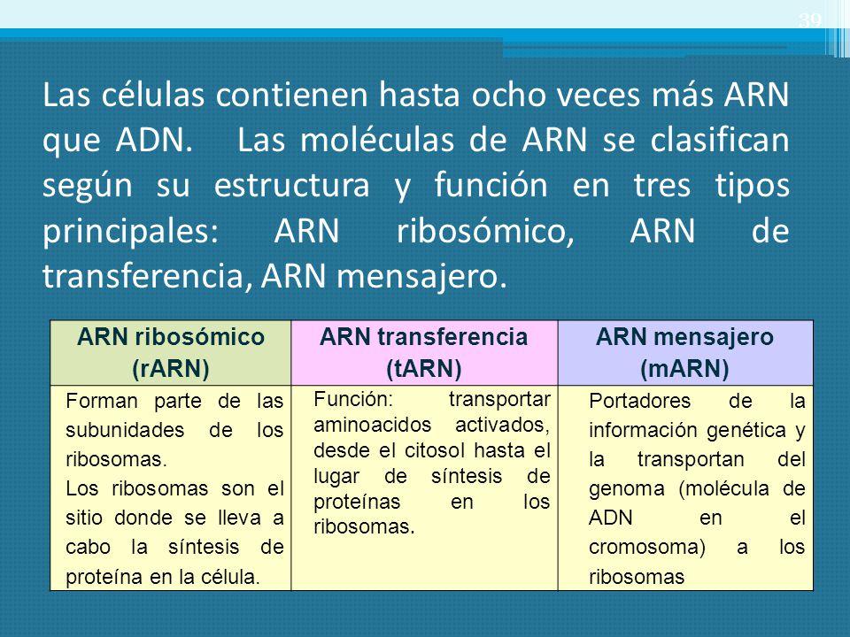 Las células contienen hasta ocho veces más ARN que ADN. Las moléculas de ARN se clasifican según su estructura y función en tres tipos principales: AR