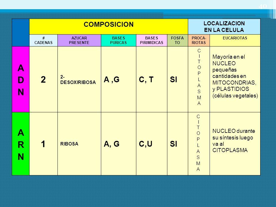 COMPOSICION LOCALIZACION EN LA CELULA # CADENAS AZUCAR PRESENTE BASES PURICAS BASES PIRIMIDICAS FOSFA TO PROCA- RIOTAS EUCARIOTAS 2 2- DESOXIRIBOSA A,