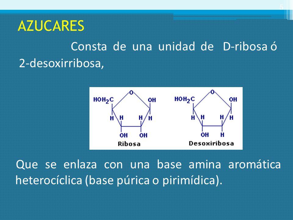 AZUCARES Consta de una unidad de D-ribosa ó 2-desoxirribosa, Que se enlaza con una base amina aromática heterocíclica (base púrica o pirimídica). 5