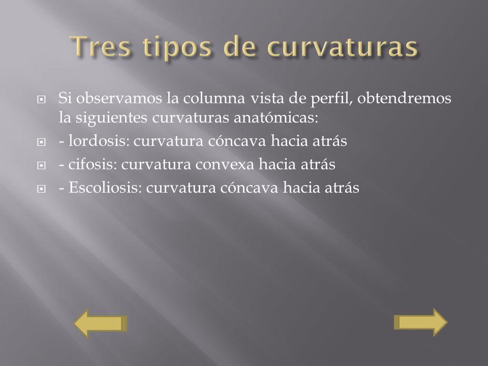 Si observamos la columna vista de perfil, obtendremos la siguientes curvaturas anatómicas: - lordosis: curvatura cóncava hacia atrás - cifosis: curvatura convexa hacia atrás - Escoliosis: curvatura cóncava hacia atrás