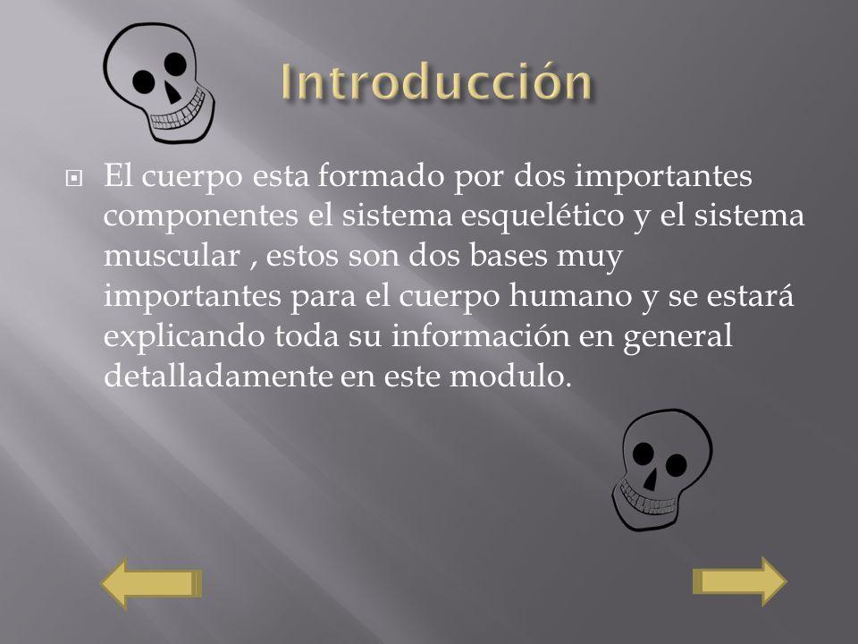 OSTEOLOGIA DE MIEMBRO INFERIOR 1 - Shortcut.lnk OSTEOLOGIA DE MIEMBRO INFERIOR 1 - Shortcut.lnk