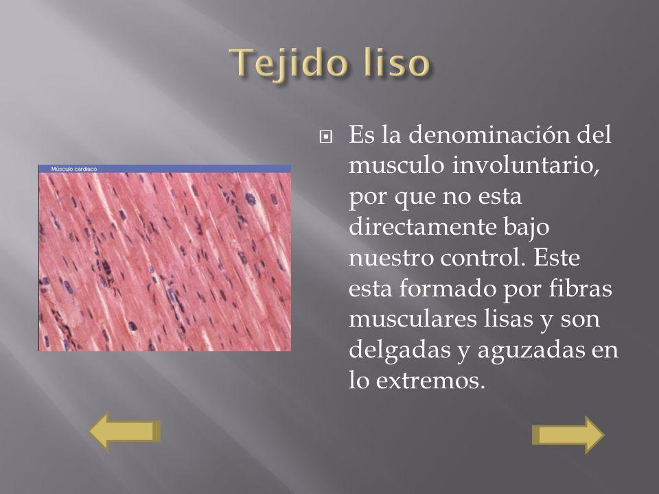 Es la denominación del musculo involuntario, por que no esta directamente bajo nuestro control. Este esta formado por fibras musculares lisas y son de