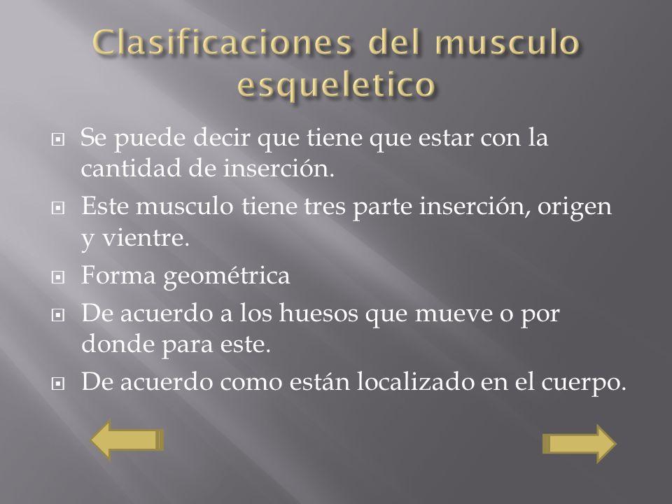 Se puede decir que tiene que estar con la cantidad de inserción. Este musculo tiene tres parte inserción, origen y vientre. Forma geométrica De acuerd