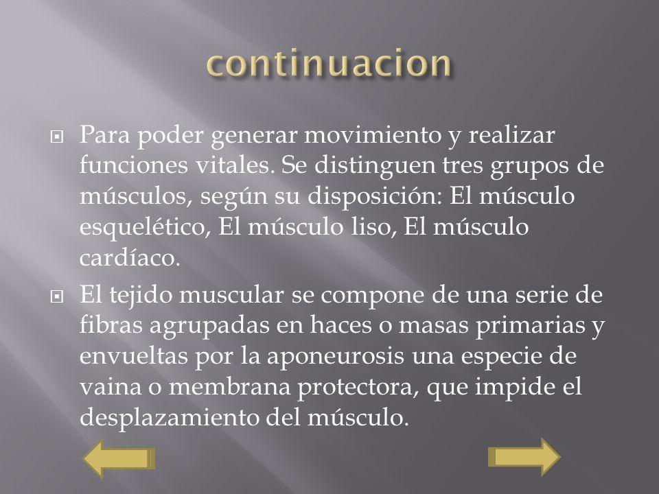 Para poder generar movimiento y realizar funciones vitales. Se distinguen tres grupos de músculos, según su disposición: El músculo esquelético, El mú