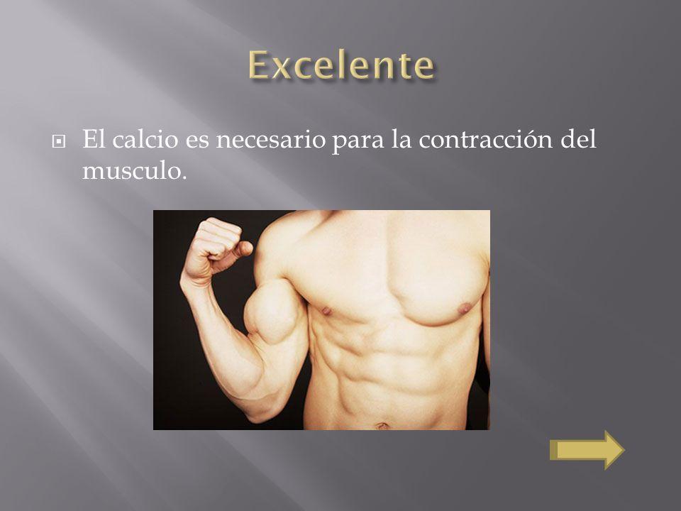El calcio es necesario para la contracción del musculo.