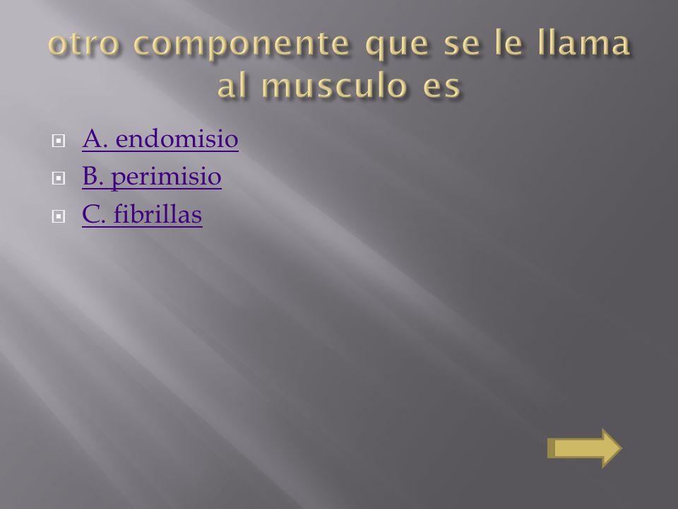A. endomisio B. perimisio C. fibrillas