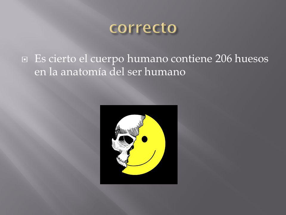 Es cierto el cuerpo humano contiene 206 huesos en la anatomía del ser humano