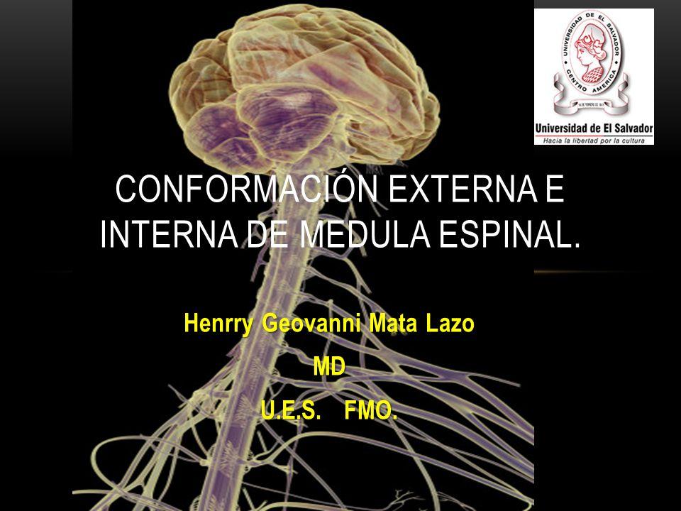 Henrry Geovanni Mata Lazo MD U.E.S. FMO. CONFORMACIÓN EXTERNA E INTERNA DE MEDULA ESPINAL.