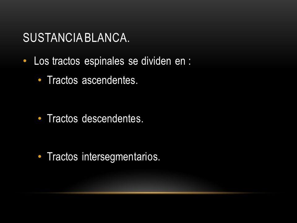SUSTANCIA BLANCA. Los tractos espinales se dividen en : Tractos ascendentes. Tractos descendentes. Tractos intersegmentarios.