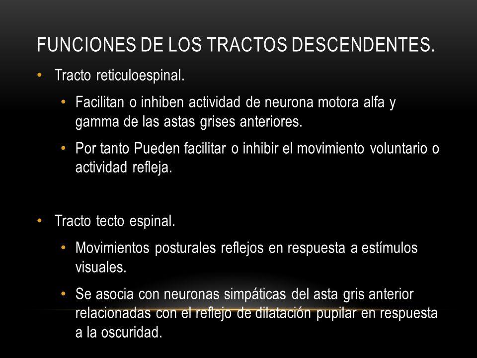 FUNCIONES DE LOS TRACTOS DESCENDENTES. Tracto reticuloespinal. Facilitan o inhiben actividad de neurona motora alfa y gamma de las astas grises anteri