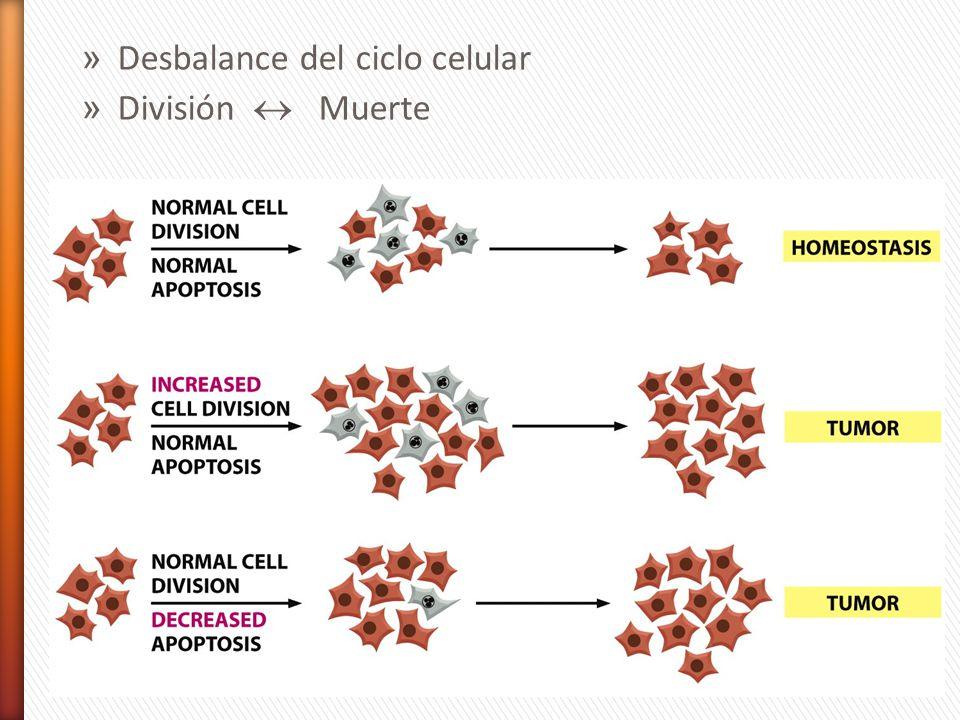 » Desbalance del ciclo celular » División Muerte