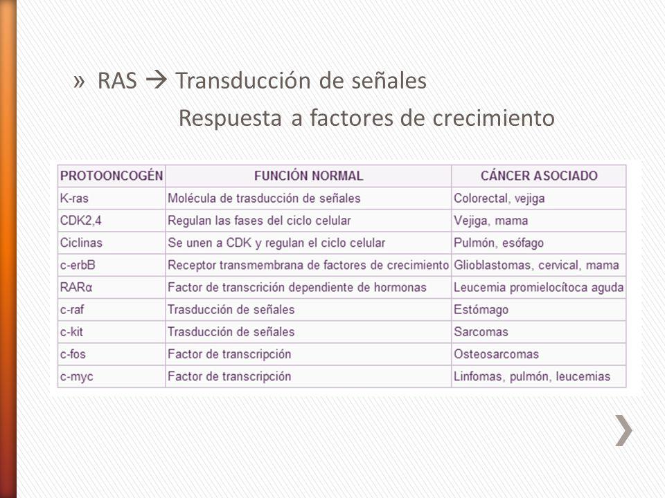 » RAS Transducción de señales Respuesta a factores de crecimiento