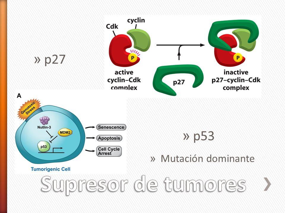 » p53 » Mutación dominante » p27