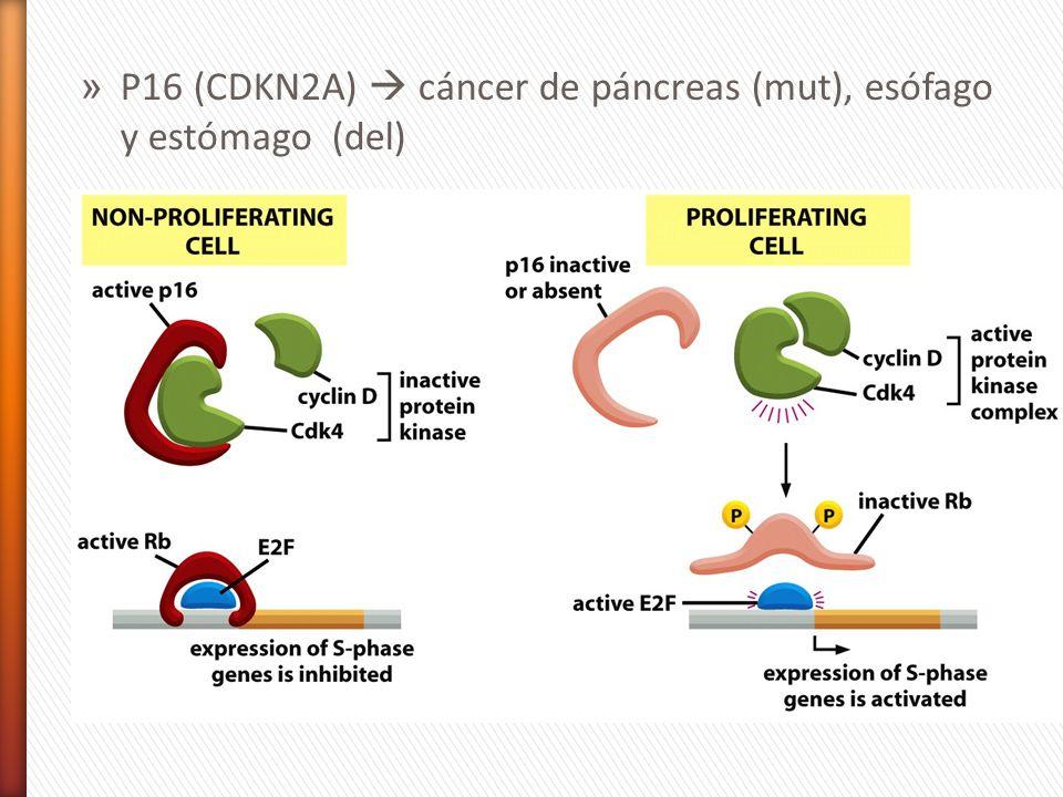 » P16 (CDKN2A) cáncer de páncreas (mut), esófago y estómago (del)