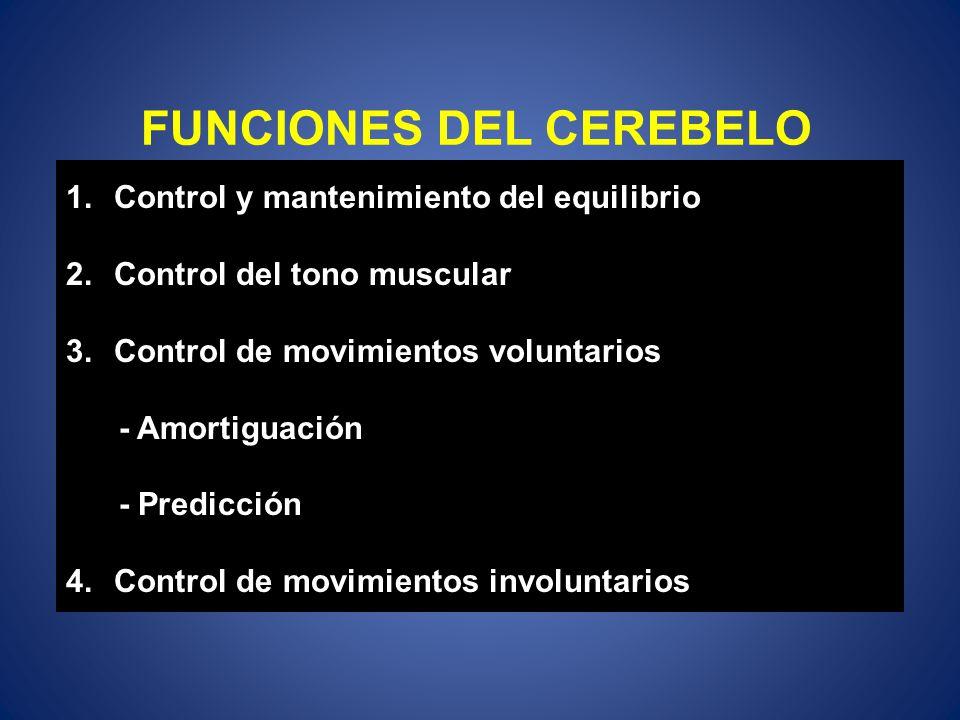 FUNCIONES DEL CEREBELO 1.Control y mantenimiento del equilibrio 2.Control del tono muscular 3.Control de movimientos voluntarios - Amortiguación - Pre