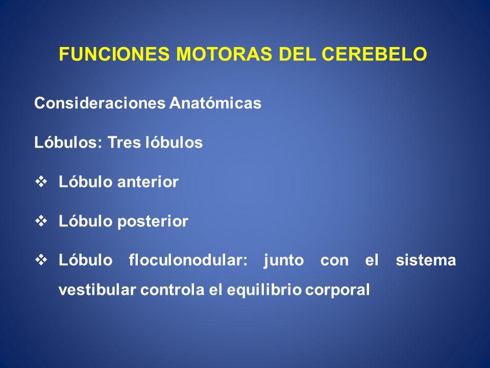 FUNCIONES MOTORAS DEL CEREBELO Consideraciones Anatómicas Lóbulos: Tres lóbulos Lóbulo anterior Lóbulo posterior Lóbulo floculonodular: junto con el s