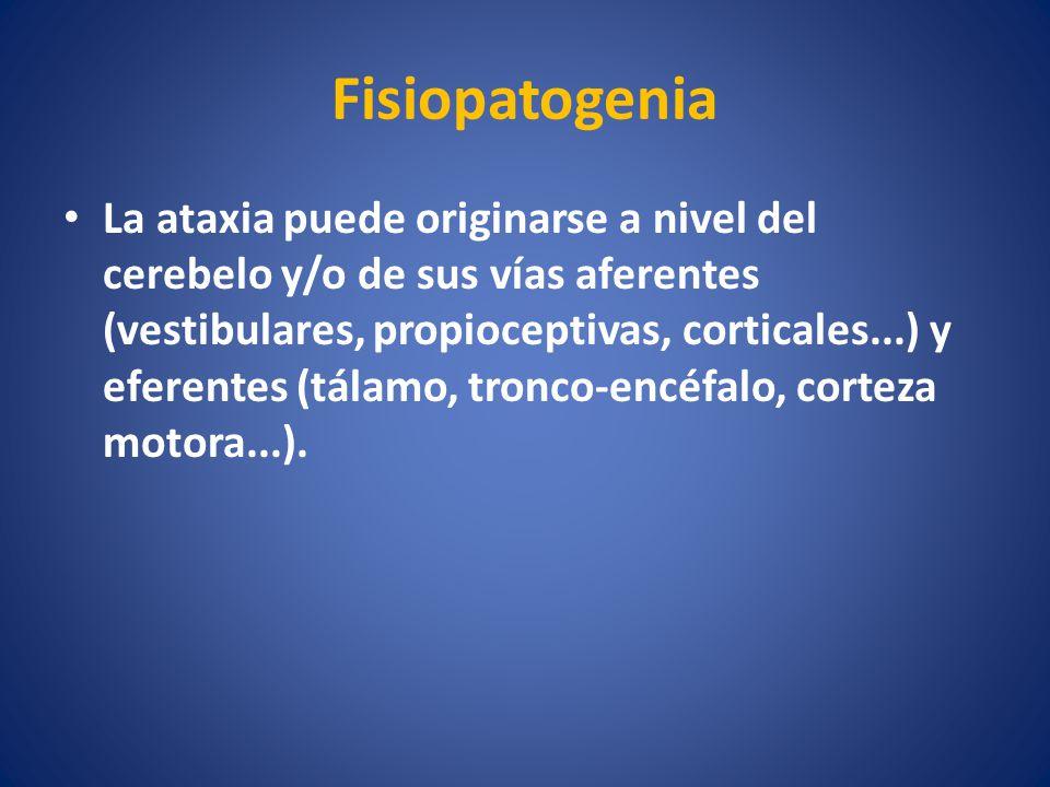 Fisiopatogenia La ataxia puede originarse a nivel del cerebelo y/o de sus vías aferentes (vestibulares, propioceptivas, corticales...) y eferentes (tá