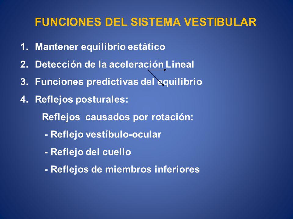 FUNCIONES DEL SISTEMA VESTIBULAR 1.Mantener equilibrio estático 2.Detección de la aceleración Lineal 3.Funciones predictivas del equilibrio 4.Reflejos