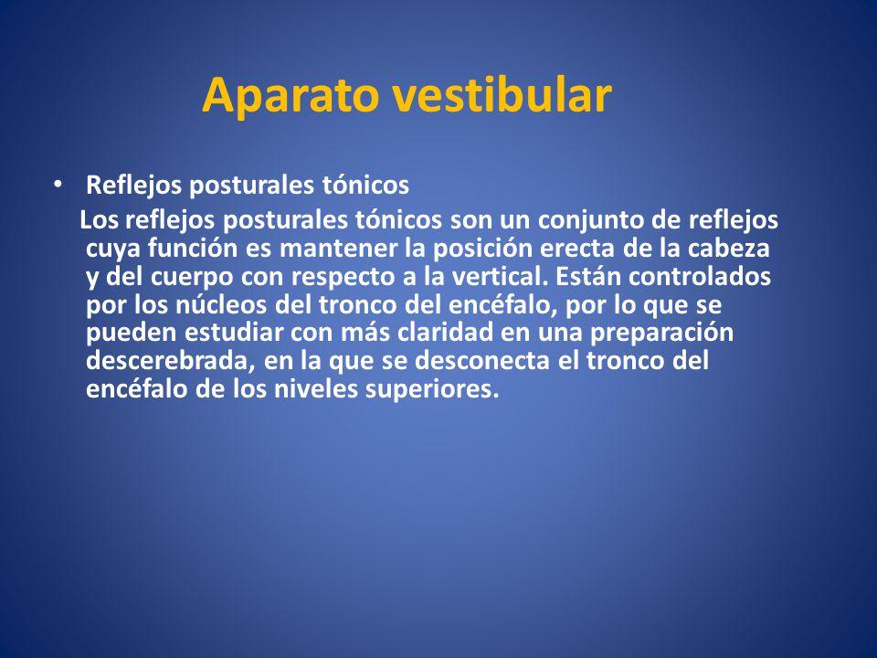 Aparato vestibular Reflejos posturales tónicos Los reflejos posturales tónicos son un conjunto de reflejos cuya función es mantener la posición erecta