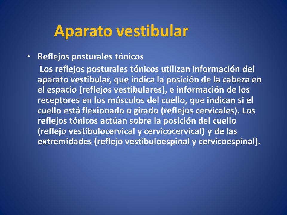Aparato vestibular Reflejos posturales tónicos Los reflejos posturales tónicos utilizan información del aparato vestibular, que indica la posición de