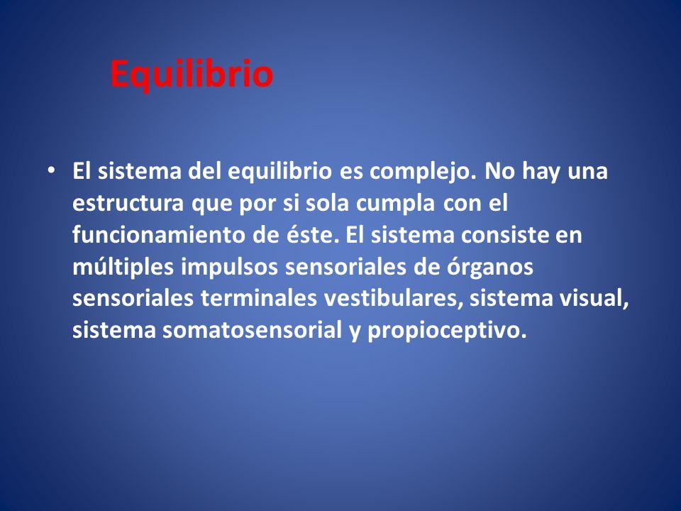 Equilibrio El sistema del equilibrio es complejo. No hay una estructura que por si sola cumpla con el funcionamiento de éste. El sistema consiste en m