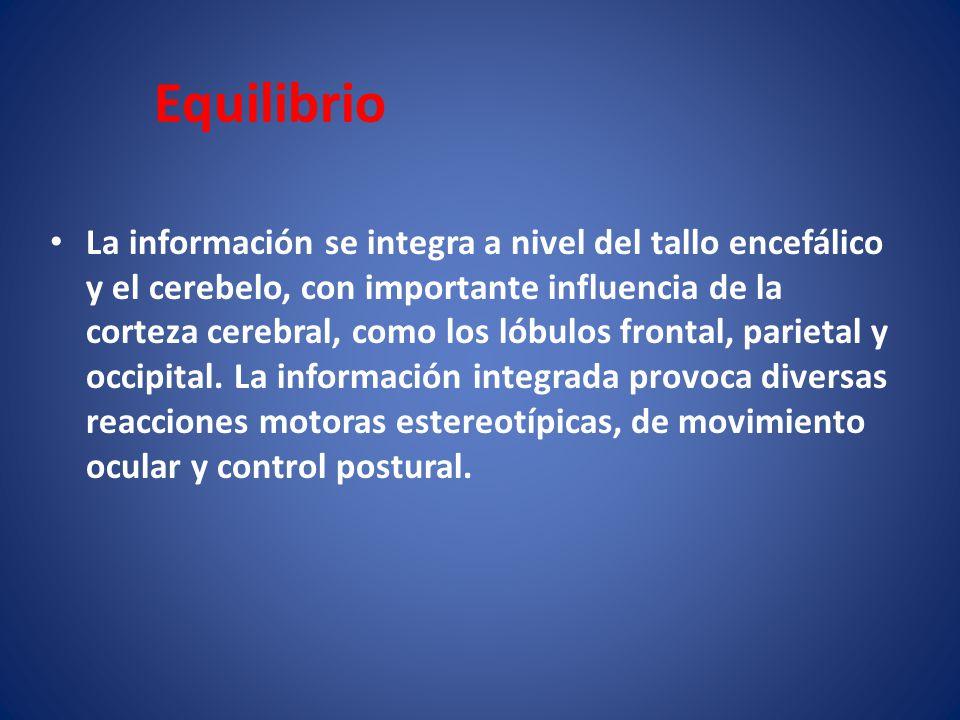 Equilibrio La información se integra a nivel del tallo encefálico y el cerebelo, con importante influencia de la corteza cerebral, como los lóbulos fr