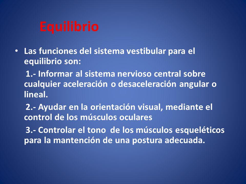Equilibrio Las funciones del sistema vestibular para el equilibrio son: 1.- Informar al sistema nervioso central sobre cualquier aceleración o desacel