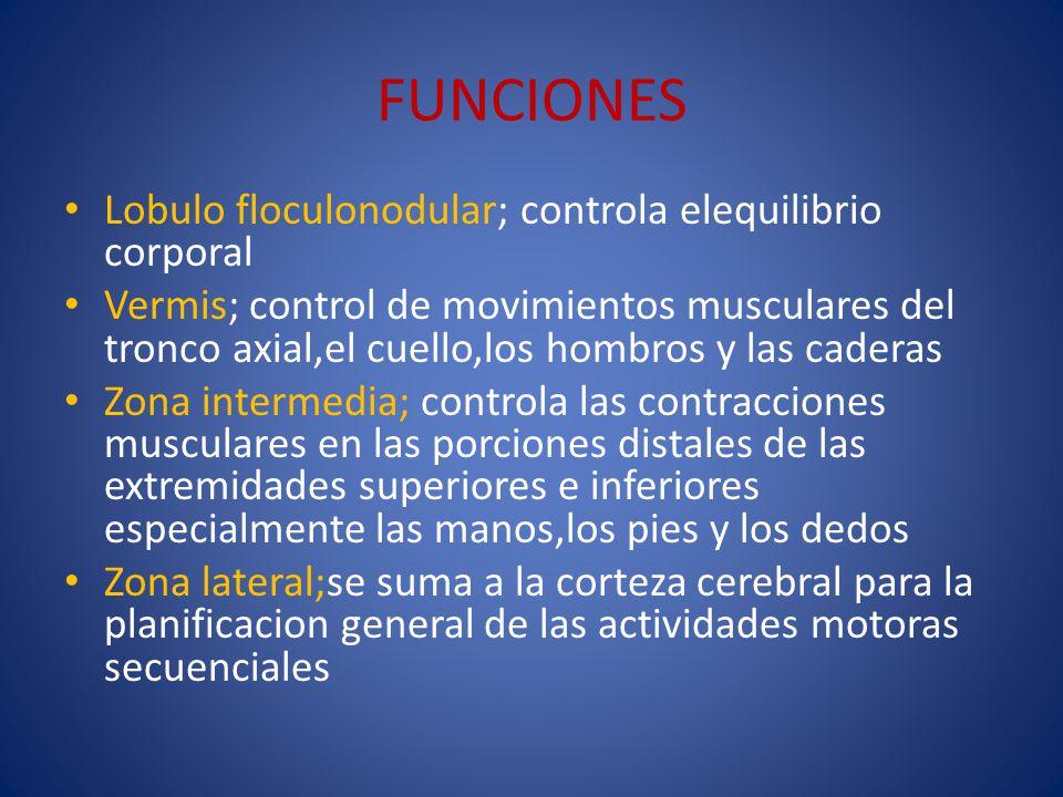 FUNCIONES Lobulo floculonodular; controla elequilibrio corporal Vermis; control de movimientos musculares del tronco axial,el cuello,los hombros y las