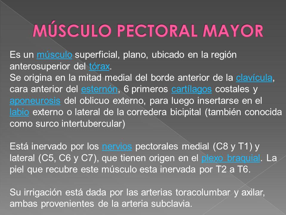 Es un músculo superficial, plano, ubicado en la región anterosuperior del tórax.músculotórax Se origina en la mitad medial del borde anterior de la cl