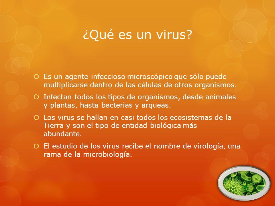 ¿Qué es un virus.