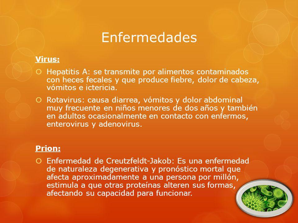 Enfermedades Virus: Hepatitis A: se transmite por alimentos contaminados con heces fecales y que produce fiebre, dolor de cabeza, vómitos e ictericia.