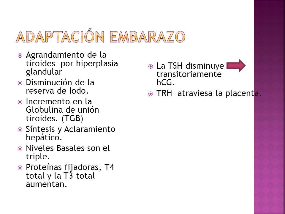 Agrandamiento de la tiroides por hiperplasia glandular Disminución de la reserva de Iodo. Incremento en la Globulina de unión tiroides. (TGB) Síntesis