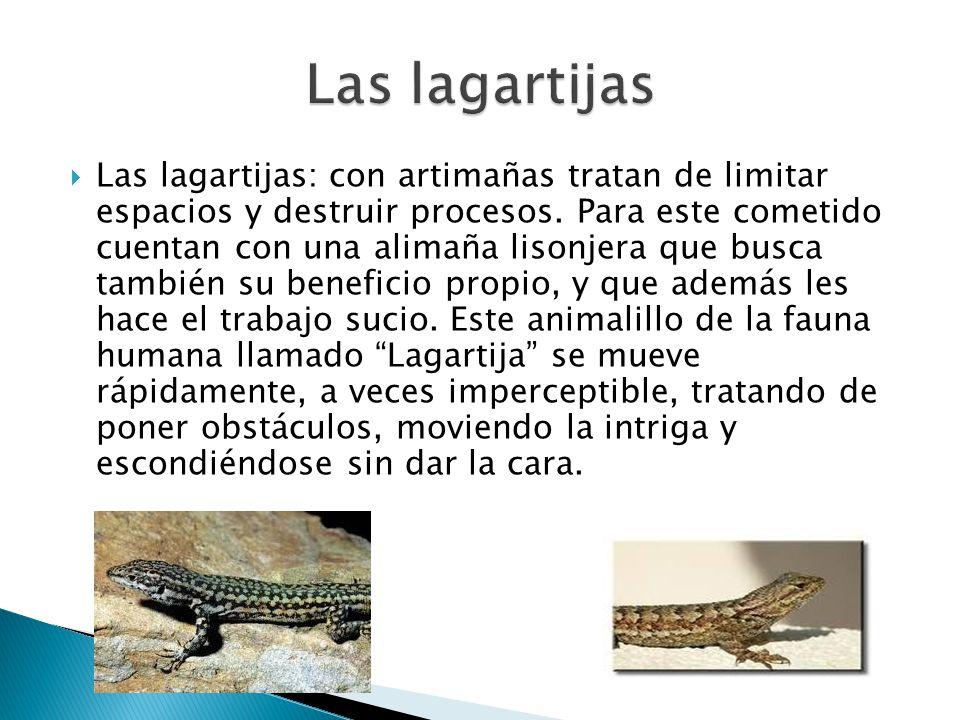 Las lagartijas: con artimañas tratan de limitar espacios y destruir procesos. Para este cometido cuentan con una alimaña lisonjera que busca también s