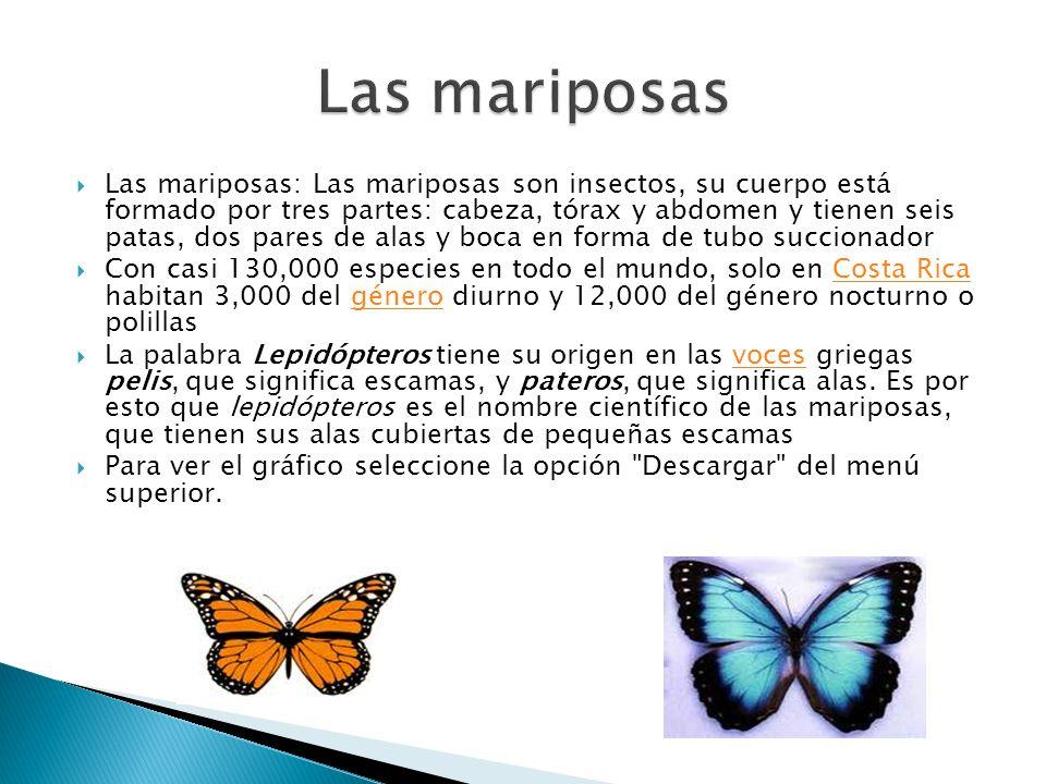 Las mariposas: Las mariposas son insectos, su cuerpo está formado por tres partes: cabeza, tórax y abdomen y tienen seis patas, dos pares de alas y bo