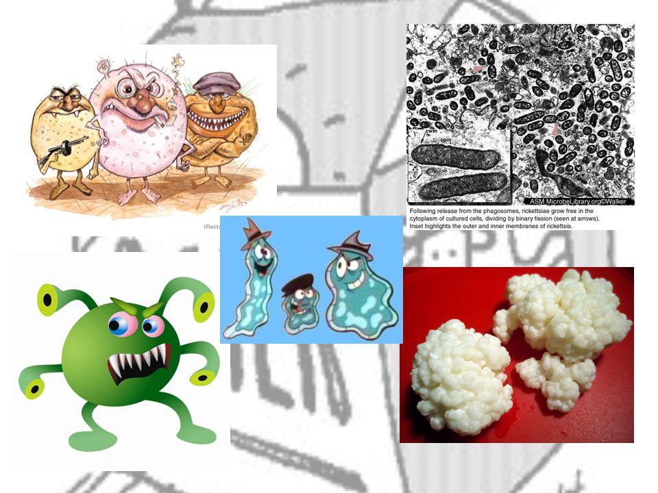 Bacterias Las bacterias manifiestan diferencias en los nutrientes, dependiendo de las condiciones ambientales, como la temperatura, oxigeno y pH.