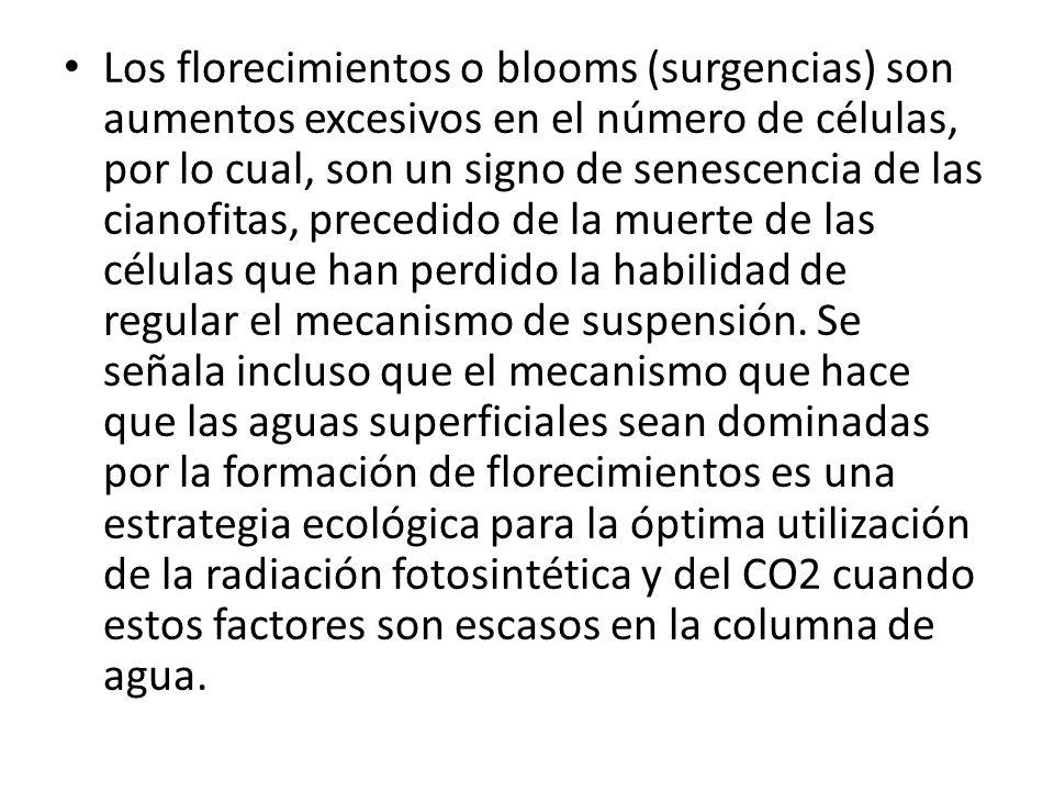 Los florecimientos o blooms (surgencias) son aumentos excesivos en el número de células, por lo cual, son un signo de senescencia de las cianofitas, p