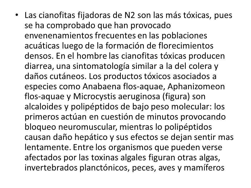 Las cianofitas fijadoras de N2 son las más tóxicas, pues se ha comprobado que han provocado envenenamientos frecuentes en las poblaciones acuáticas lu