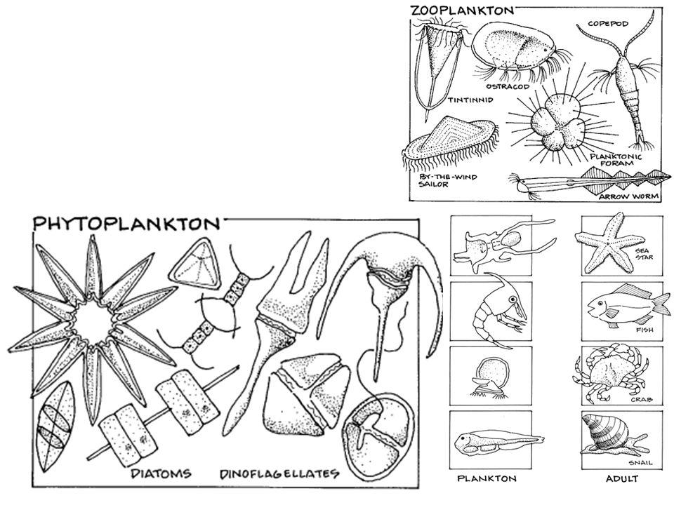 CLASIFICACIÓN Y CARACTERÍSTICAS ESTRUCTURALES La diversidad morfológica es considerable.