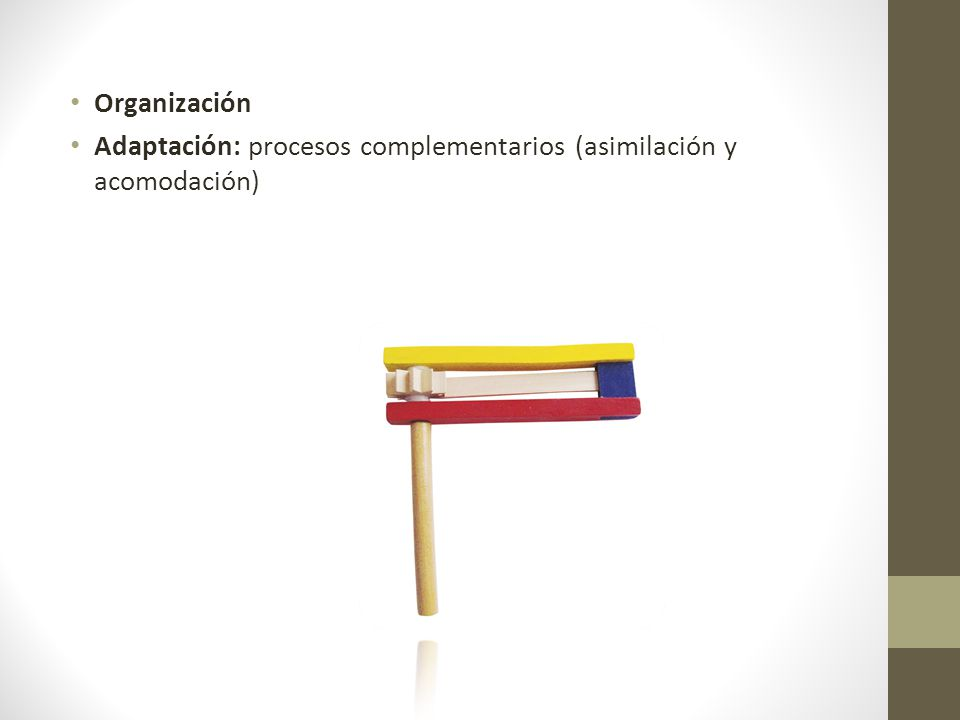 Organización Adaptación: procesos complementarios (asimilación y acomodación)