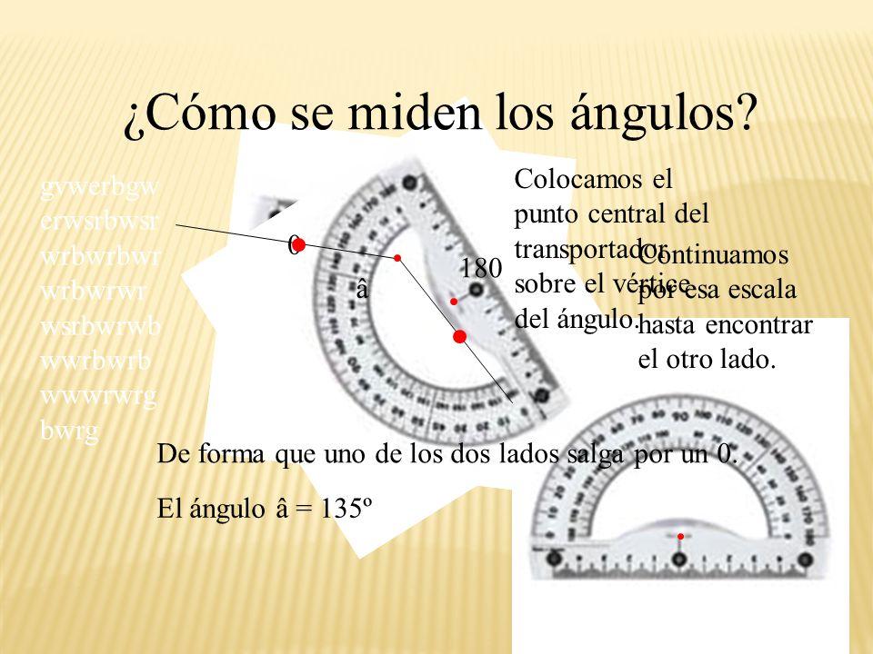 ¿Cómo se miden los ángulos? Colocamos el punto central del transportador sobre el vértice del ángulo. â De forma que uno de los dos lados salga por un