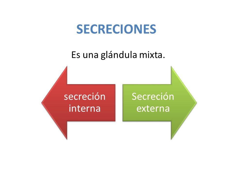 SECRECIONES Es una glándula mixta. secreción interna Secreción externa
