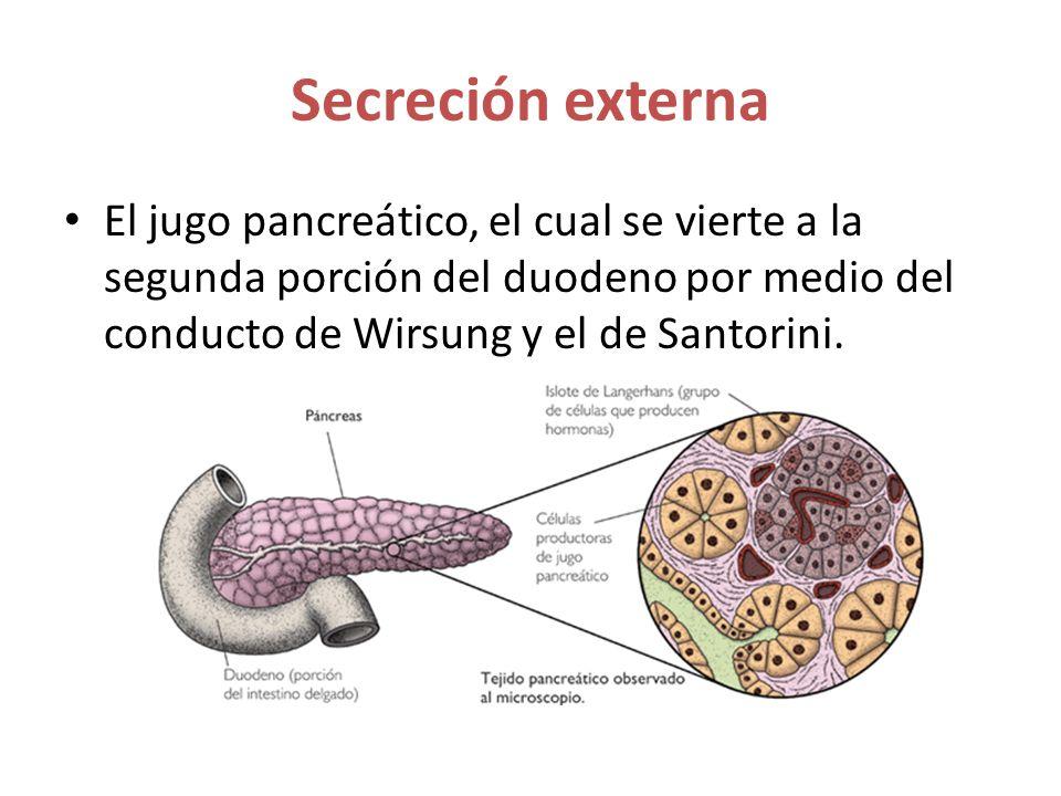 El jugo pancreático, el cual se vierte a la segunda porción del duodeno por medio del conducto de Wirsung y el de Santorini.