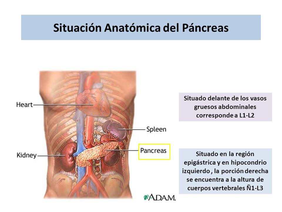 Situación Anatómica del Páncreas Situado delante de los vasos gruesos abdominales corresponde a L1-L2 Situado en la región epigástrica y en hipocondri