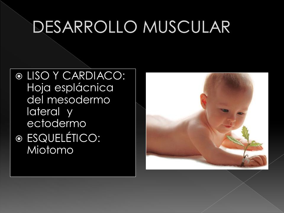 LISO Y CARDIACO: Hoja esplácnica del mesodermo lateral y ectodermo ESQUELÉTICO: Miotomo