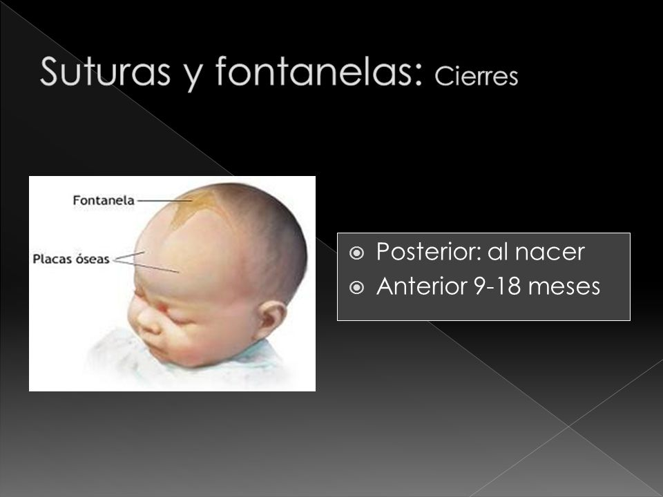 Posterior: al nacer Anterior 9-18 meses