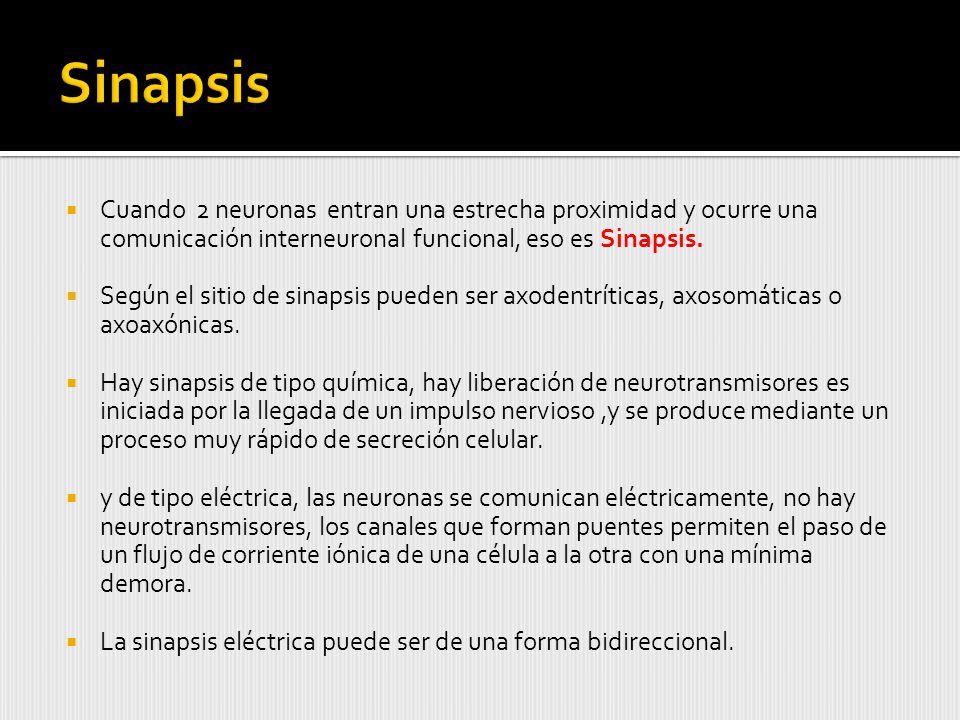 Cuando 2 neuronas entran una estrecha proximidad y ocurre una comunicación interneuronal funcional, eso es Sinapsis.