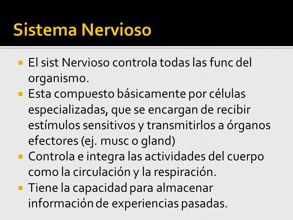 El sist Nervioso controla todas las func del organismo.
