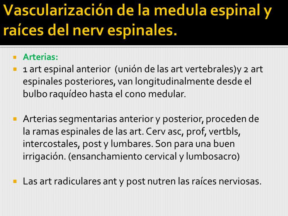 Arterias: 1 art espinal anterior (unión de las art vertebrales)y 2 art espinales posteriores, van longitudinalmente desde el bulbo raquídeo hasta el cono medular.