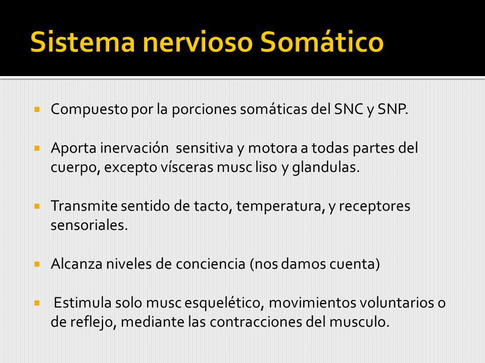Compuesto por la porciones somáticas del SNC y SNP.